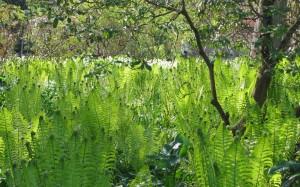 kew gardens botanischer garten der superlative e guidelondon. Black Bedroom Furniture Sets. Home Design Ideas